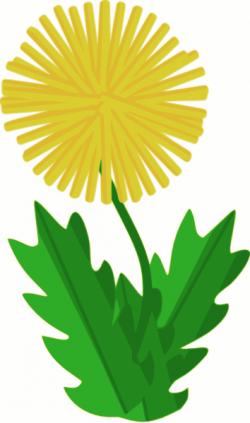 Dandelion clipart weeds
