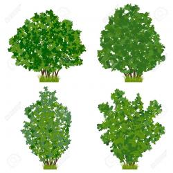 Shrub clipart shrubbery