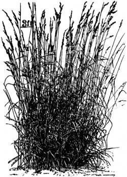 Moss clipart tall grass