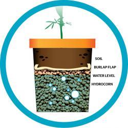Pot Plant clipart grew
