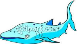 Sharkwhale clipart funny