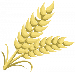 Grains clipart wheat bundle