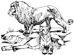 Lioness clipart female lion