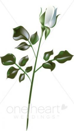 White Rose clipart large white