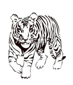 Bengal clipart black and white