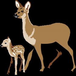 Deer clipart fawn