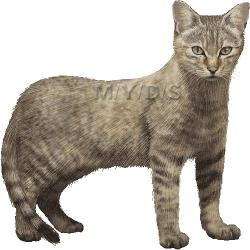 Wildcat clipart real cat