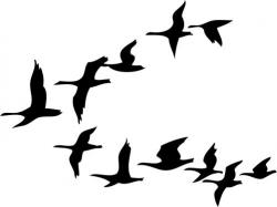 Flock Of Birds clipart flight drawing