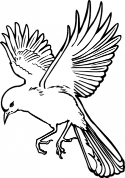 Drawn dove bird fly
