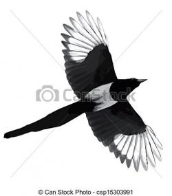 Magpie clipart flying
