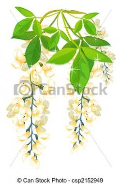 Wisteria clipart drawing