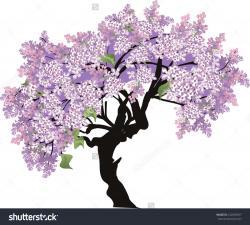 Wisteria clipart wisteria tree
