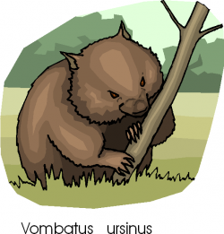 Wombat clipart angry