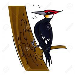 Woodpecker clipart cute