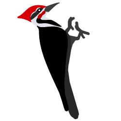 Woodpecker clipart bird