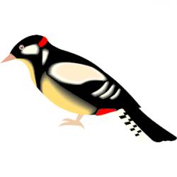 Woodpecker clipart vector