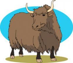 Animal clipart yak