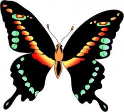 Indigo clipart blue butterfly