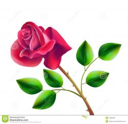 Red Rose clipart bloom