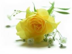 Yellow Rose clipart glitter