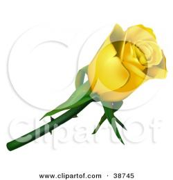 Yellow Rose clipart single