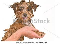 Yorkies clipart brown puppy